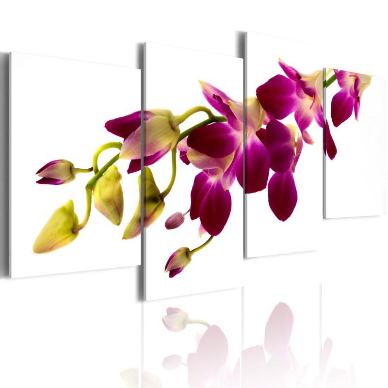 Obraz  Blask orchidei