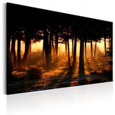 Obraz  Leśny świt