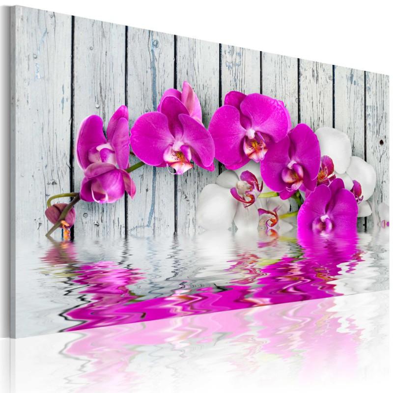 Obraz  harmonia orchidea