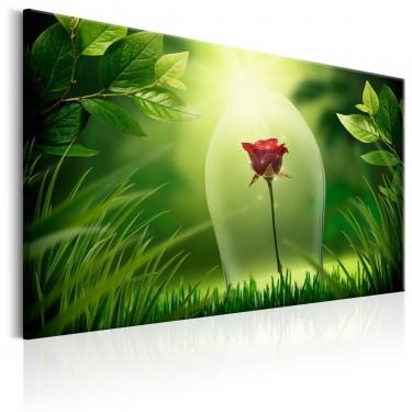 Obraz  Magiczna róża