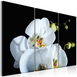 Obraz  Śnieżnobiała orchidea