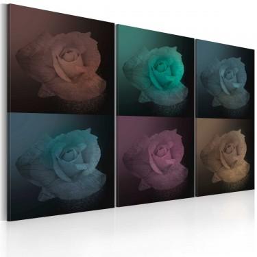 Obraz  Róża w sześciu odsłonach