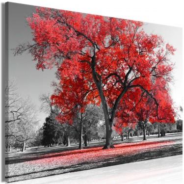Obraz  Jesień w parku (1częściowy) szeroki czerwony