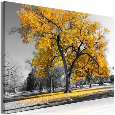 Obraz  Jesień w parku (1częściowy) szeroki złoty