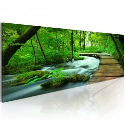 Obraz  Leśny deptak