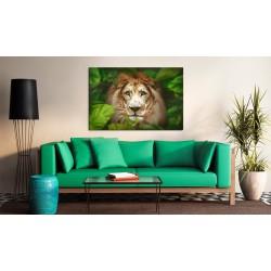 Obraz  Oczy dżungli