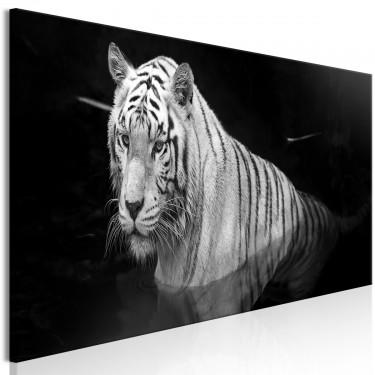 Obraz  Lśniący tygrys (1częściowy) czarnobiały wąski