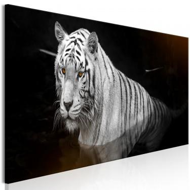 Obraz  Lśniący tygrys (1częściowy) pomarańczowy wąski