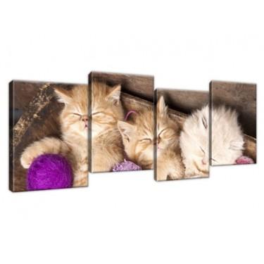Obraz Śpiące koty w misce