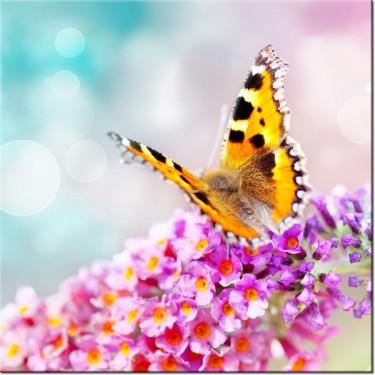 Obraz Motyl na kwiatkach