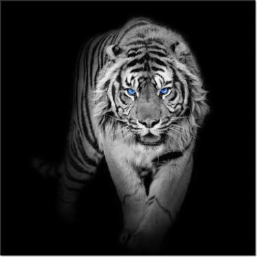 Obraz Tygrys w mroku niebieskie oczy
