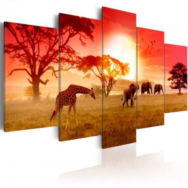 Obraz  Słoneczne kolory Afryki