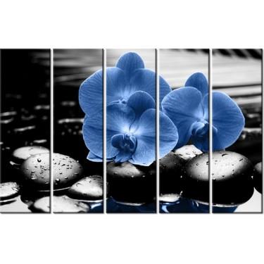 Obraz Granatowe storczyki
