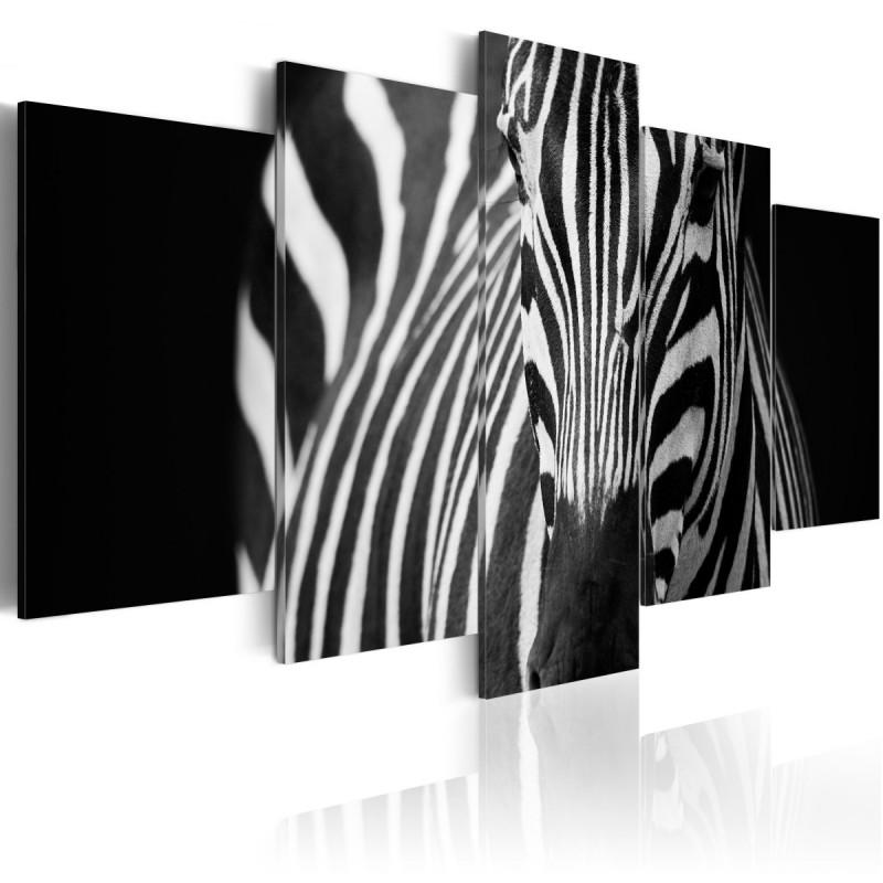 Obraz  Spojrzenie zebry