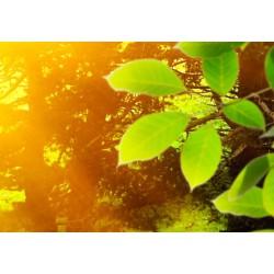 Obraz  Las i słońce