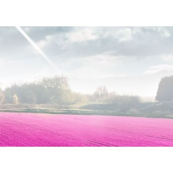 Obraz  Fioletowa kraina