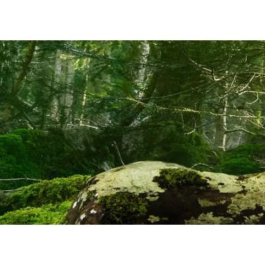 Obraz  Piękno lasu