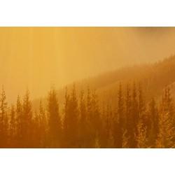 Obraz  Powitanie słońca