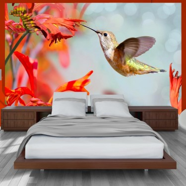 Fototapeta - Lot kolibra