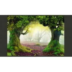 Fototapeta  Zaczarowany las