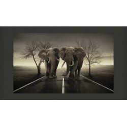 Fototapeta  Miasto słoni