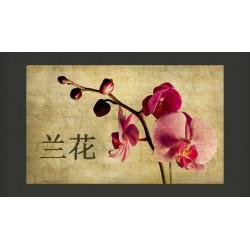 Fototapeta  Japanese orchid