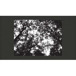 Fototapeta  Bleak forest