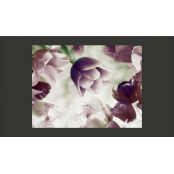 Fototapeta  Heavenly tulips