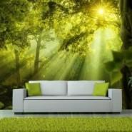 Fototapeta las • Przestrzeń w Twoim mieszkaniu